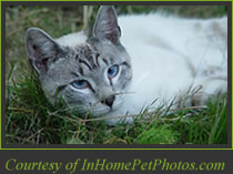 Cat Photo-Courtesy of inhomepetphotos.com